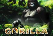 Free Online Slot Gorilla with Risk Game and Bonus Spins