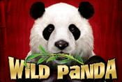 Wild Panda Slot Machine - Read Review & Play Online for Free